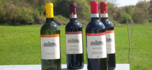 Visita in cantina e degustazione vini F.lli Natta