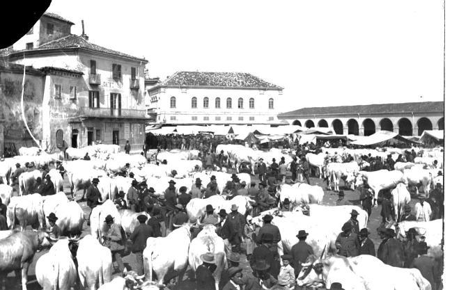 Buoi in piazza a Moncalvo ad inizio '900 - fondo fotografico Parvaux