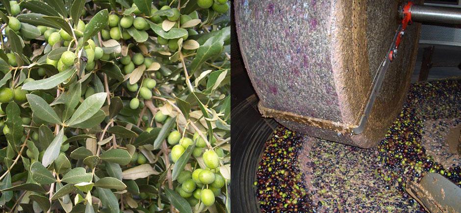 Olio d'oliva del Monferrato - Cascina rosa b&b