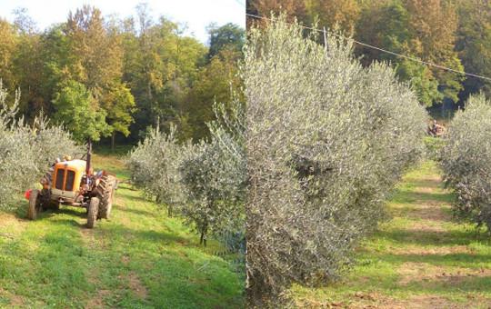 Uliveto del Monferrato - Cascina rosa b&b