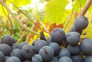 Prenota la tua degustazione di vini Poderi Girola a Cascina rosa b&b!